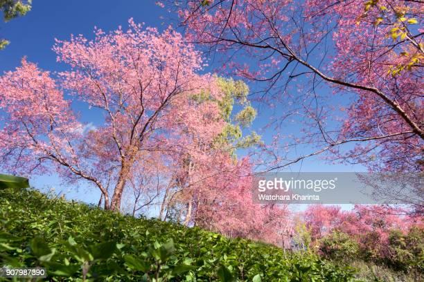 moment of brightness - mai stock-fotos und bilder