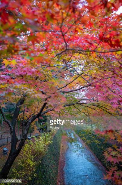 momiji-en (maple garden) iv at kitano tenmangu shrine in autumn, kyoto, japan - vsojoy stockfoto's en -beelden