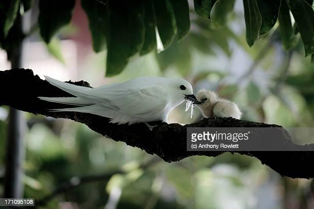 'Momma Bird feeding Young'