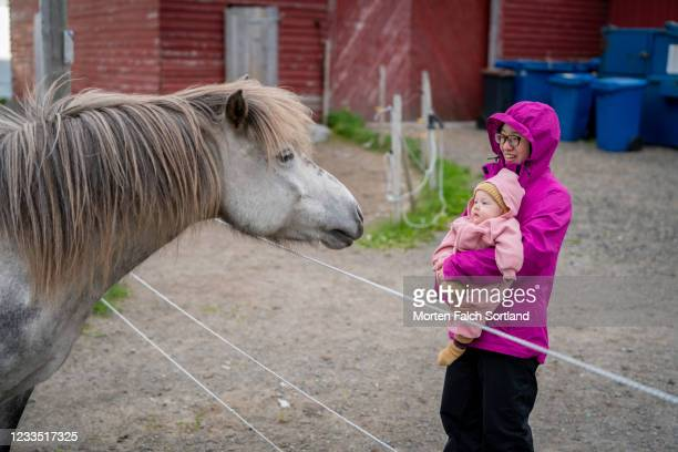 268 Cute Baby Horses Photos And Premium High Res Pictures Getty Images