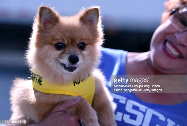 Momo is a 10yearold Pomeranian looking for a forever home from the Whiskers and Tails Foundation Momo was attending a holiday event hosted by...