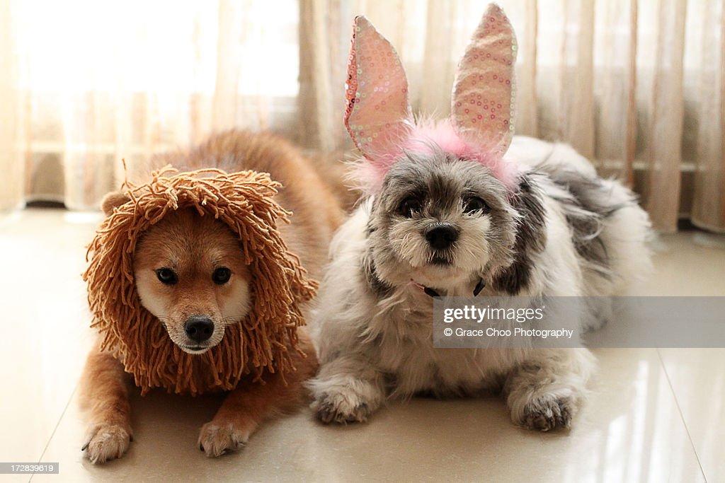 Momo & Ringo : Stock Photo
