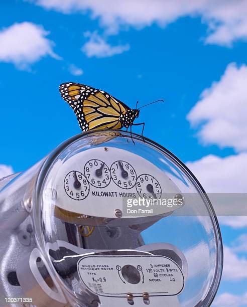 Monarch Butterfly, on Electric Meter