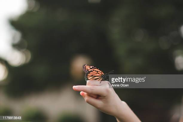monarch butterfly on hand - butterfly insect stock pictures, royalty-free photos & images