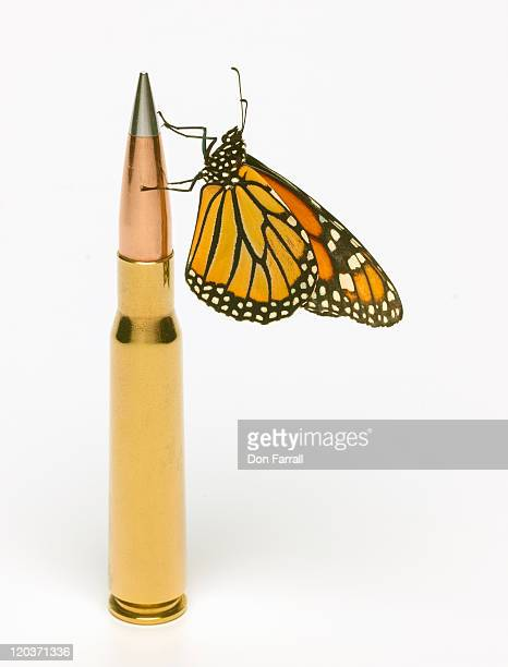 Monarch Butterfly on round of ammunition