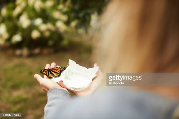 monarch butterfly on tissue in palm - heshphoto stockfoto's en -beelden