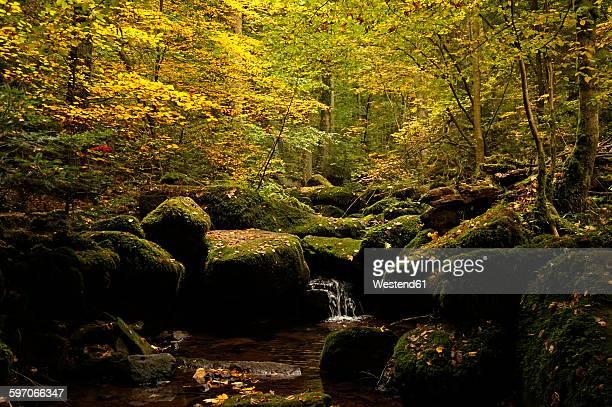 Monbach valley in autumn