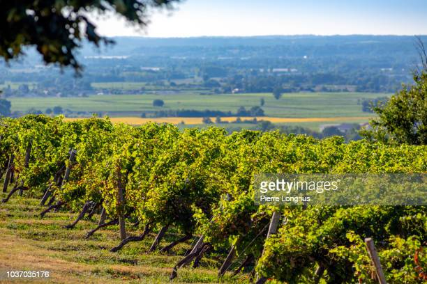 monbazillac vineyards in the summer sun with dordogne vally and bergerac vineyard in the backdrop - ベルジュラック ストックフォトと画像