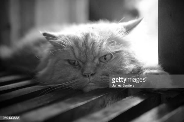 monday morning cat - kitty sanders fotografías e imágenes de stock