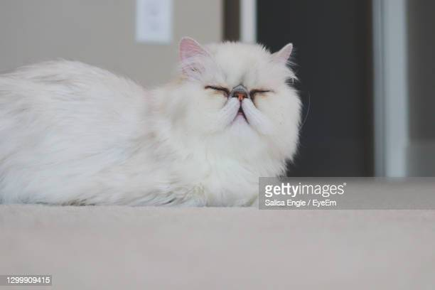 monday morning mood - monday stock pictures, royalty-free photos & images