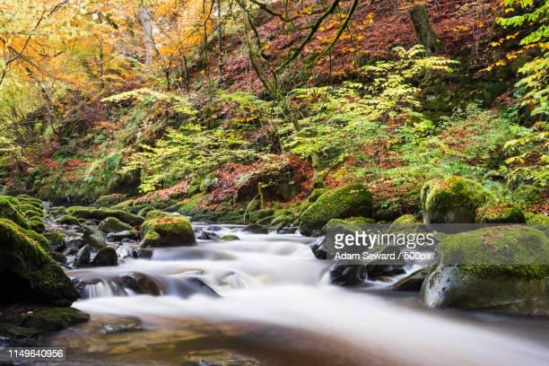 Moness Burn, Aberfeldy, Scotland