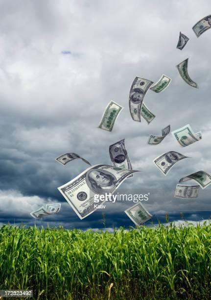 Money Falling into Corn Field