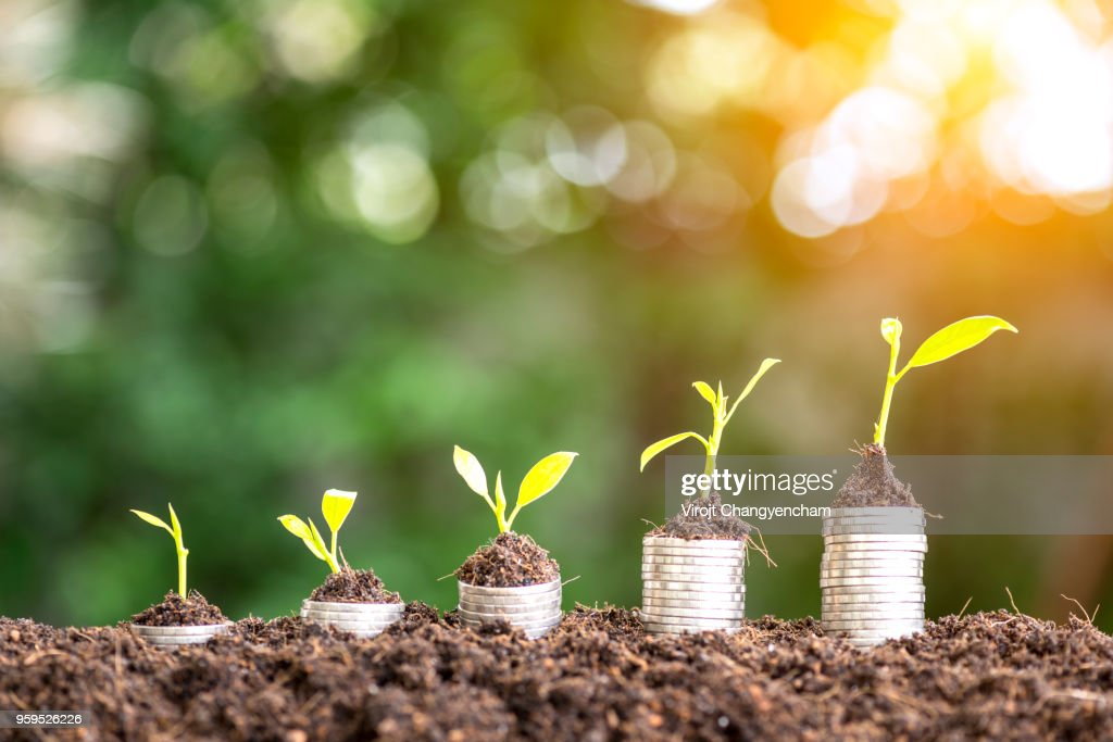 Money Grow up : Stock-Foto