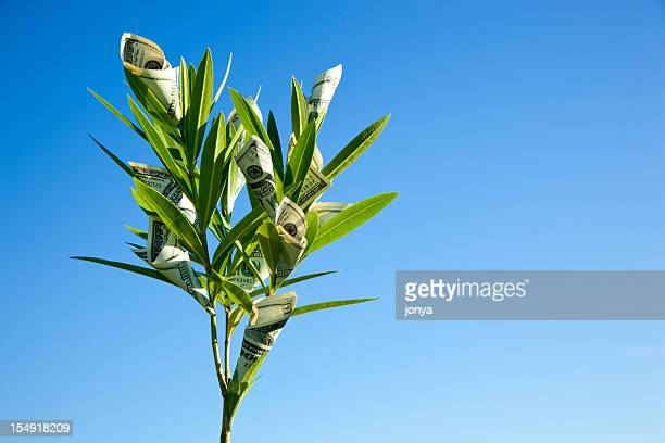 money grows on trees - money tree stock photos and pictures