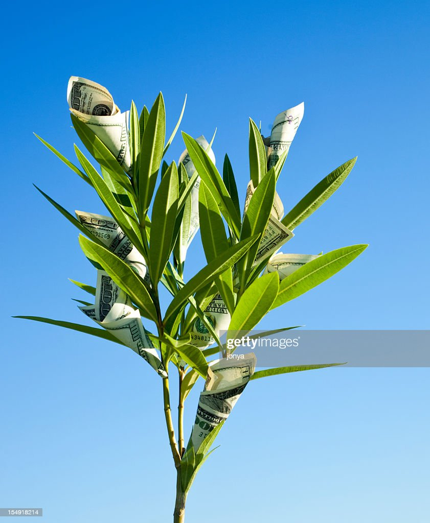Money Grows On Trees Stock Photo