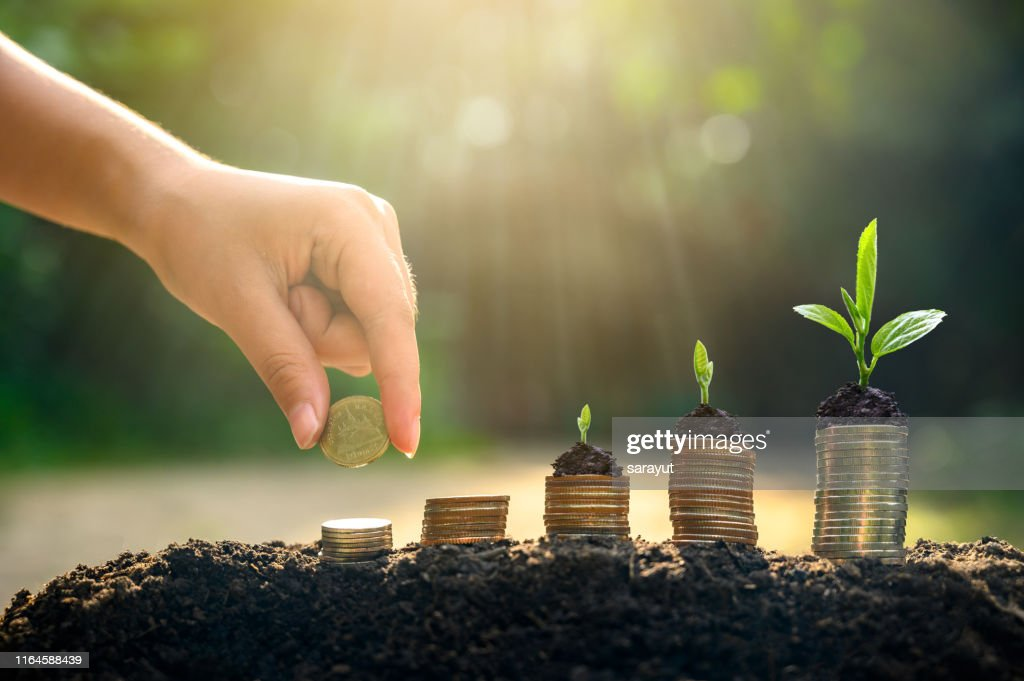 Money growth Saving money. Upper tree coins to shown concept of growing business : Stock Photo