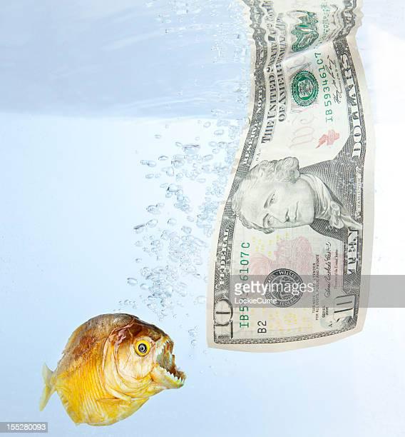l'argent - piranha photos et images de collection