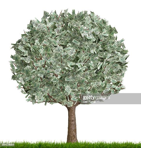 money tree, full, white background - money tree stock photos and pictures