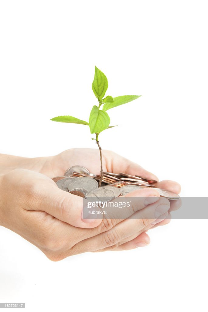 Money tree growing from a pile of coins in hands : Stock Photo
