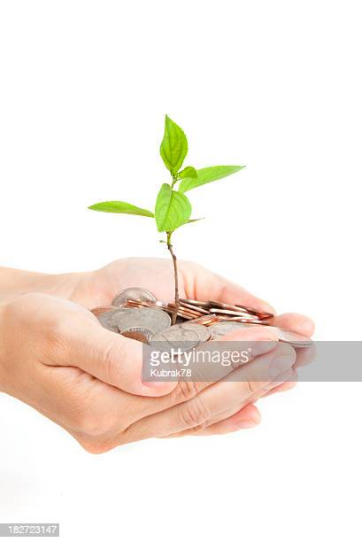 Money tree growing from a pile of coins in hands