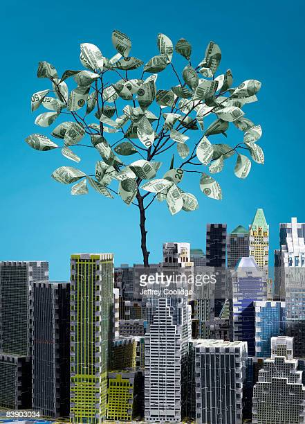 Money tree in city