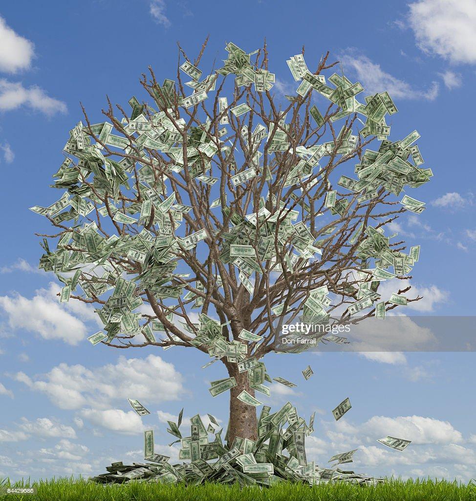 Money tree, money falling off, sky : Stock Photo