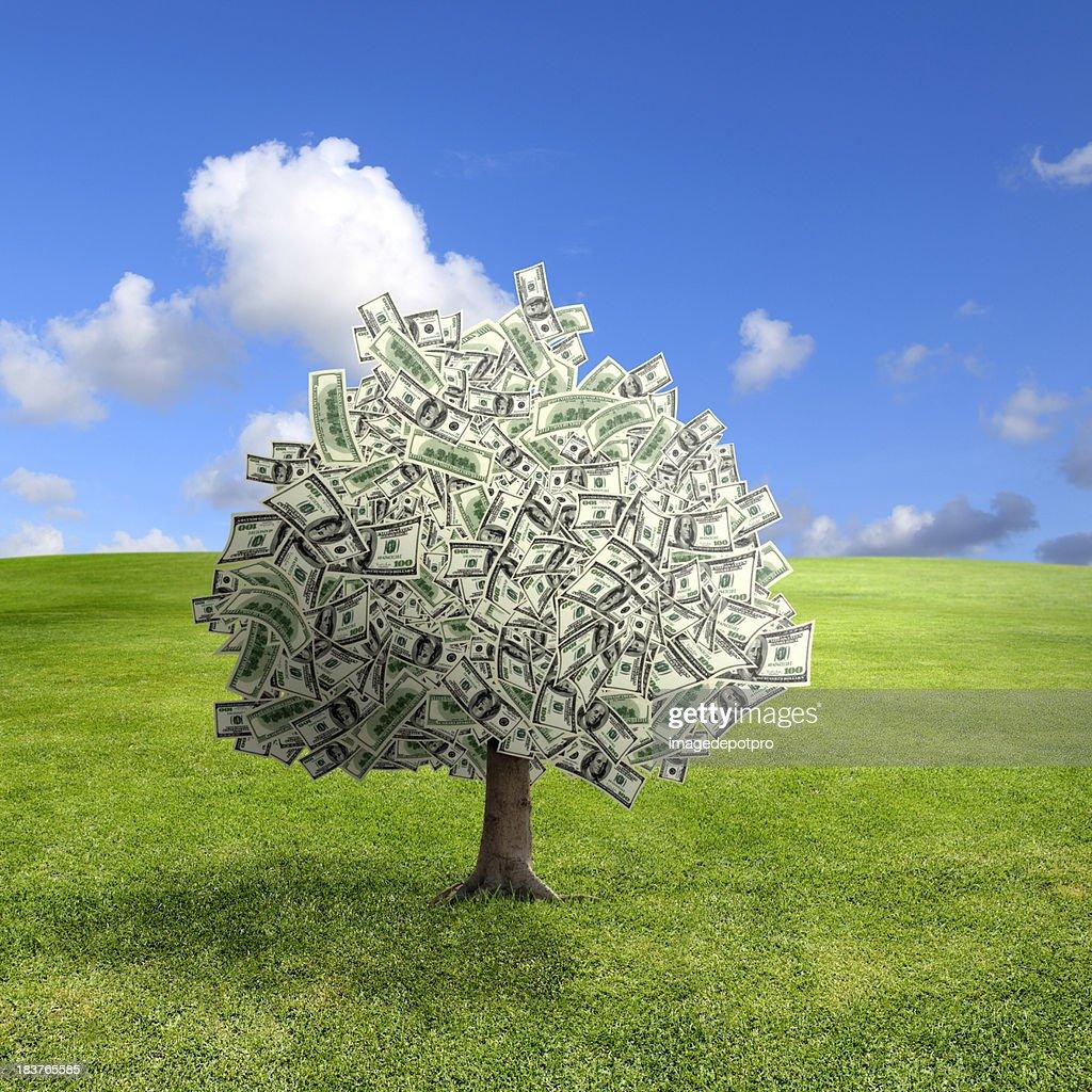 money tree on green landscape : Stock Photo
