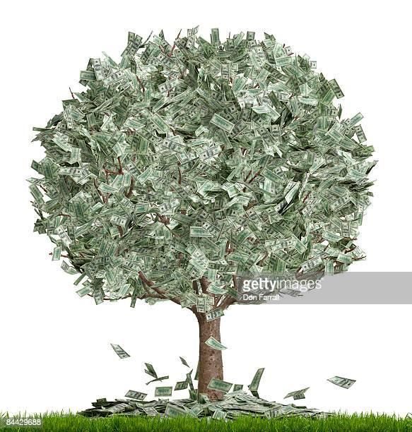 Money tree, overflowing, white background