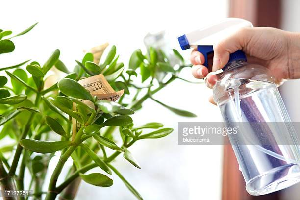 money tree - money tree stock photos and pictures