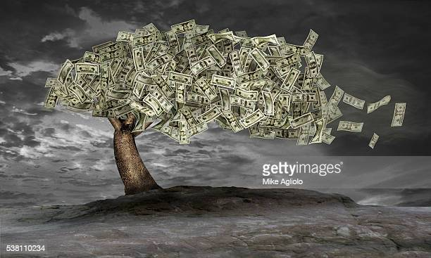 money tree - mike agliolo stock pictures, royalty-free photos & images