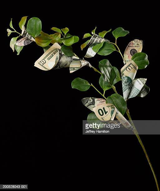 money tree spouting ten us dollar banknotes against black background - money tree stock photos and pictures