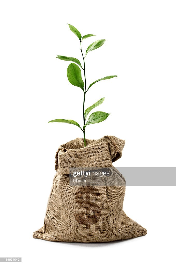 Money Tree/Money Bag With Dollar : Stock Photo