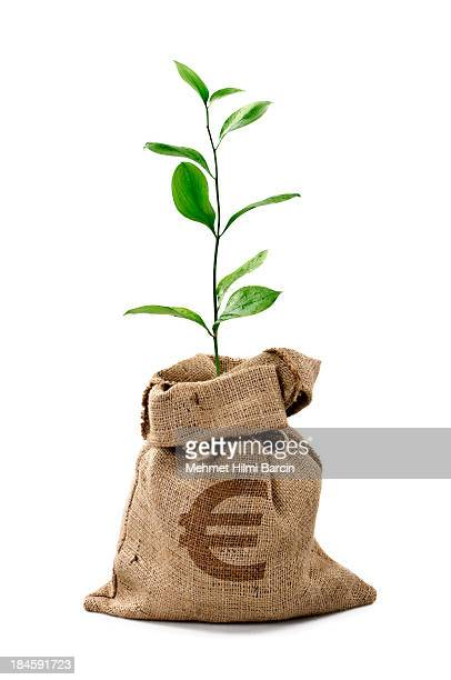 money tree/money bag with euro - money tree stock photos and pictures