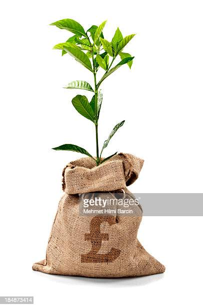 money tree/money bag with pounds - money tree stock photos and pictures