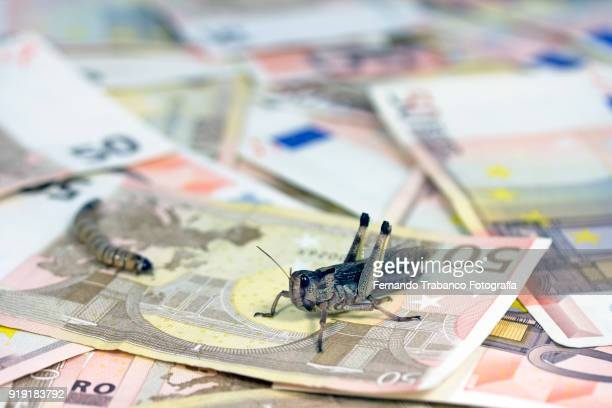 Money with insects