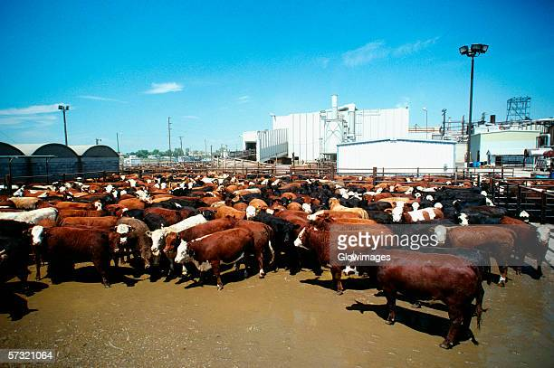 monfort beef, meat packing plant with plant in the background, greeley, colorado - meat processing plant stock pictures, royalty-free photos & images