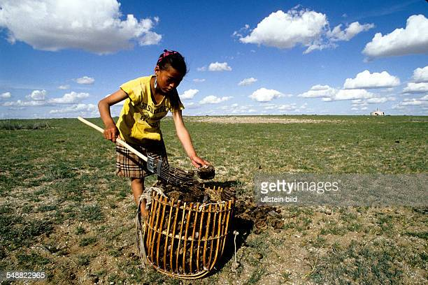 Mongolia, a girl collecting dried dung, to be an barning fuel for cooking in the Gobi steppe. Oevoer-Hangay province.