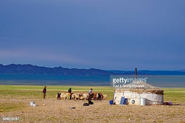 Mongolia, Bayankhongor, Gobi desert, nomad camp