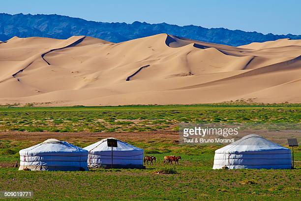 mongolia, gobi desert, khongoryn els dunes - independent mongolia stock pictures, royalty-free photos & images