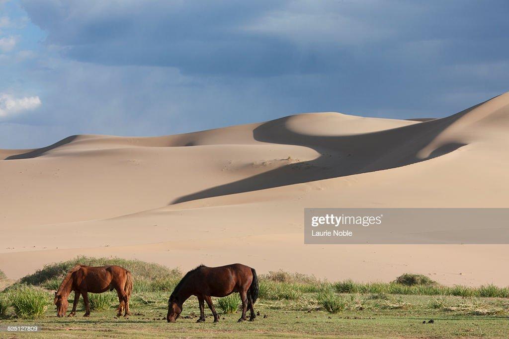 Mongolia: The Gobi : Stock Photo