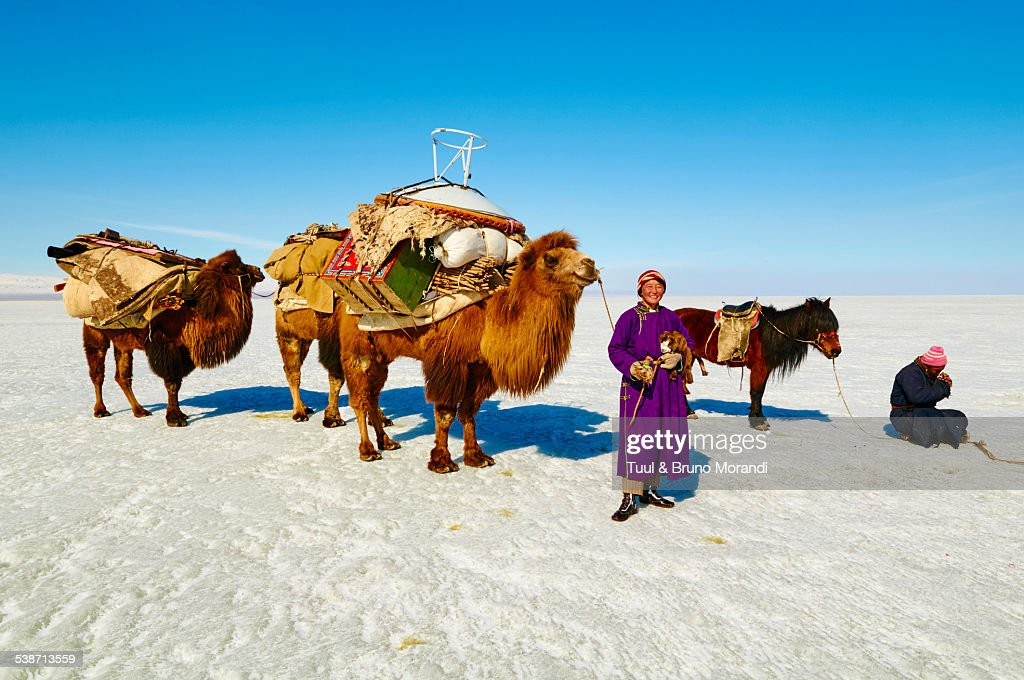 Mongolia, Khovd, nomad camp, transhumance, moving the camp on the back of the camels, caravan of the camels.