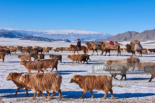 Mongolia, winter transhumance of Kazakh people