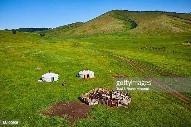 mongolia, yurt nomad camp - yurt stock pictures, royalty-free photos & images