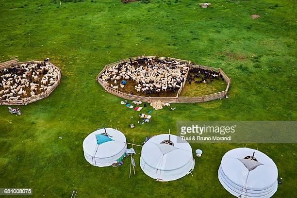 Mongolia, yurt nomad camp