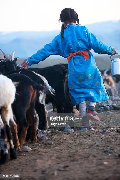 mongolian girl herding goats - hugh sitton stock-fotos und bilder