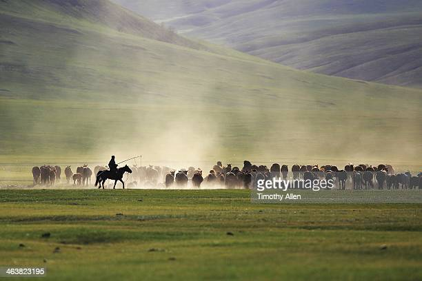 Mongolian herder rides alongside herd in valley