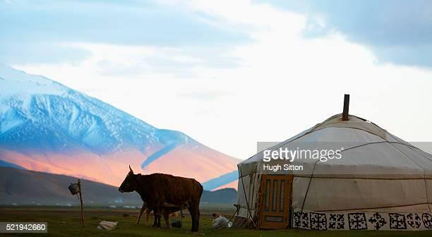 mongolian landscape - hugh sitton stock pictures, royalty-free photos & images