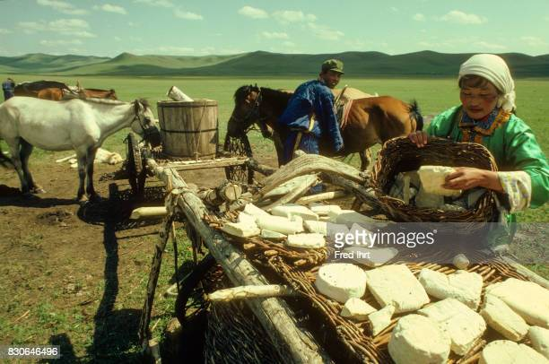 Mongolian nomad woman lying out Aaruul cheese balls to dry in the sunYaks and cows bring meat leather and milk which is used for making a variety of...
