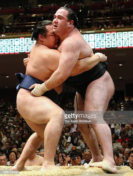 Mongolian ozeki Kakuryu whose real name is Mangaljalavyn Anand pushes Russian wrestler Aran whose real name is Alan Gabaraev out of the ring to win...