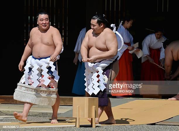 Mongolianborn both yokozuna Kakuryu and Harumafuji walk together as they attend a traditional Shinto ceremony at Yasukuni shrine in Tokyo on April 4...